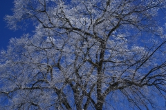 Winter21_6